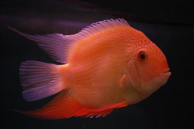 Per què es diu que no dormen els peixos?