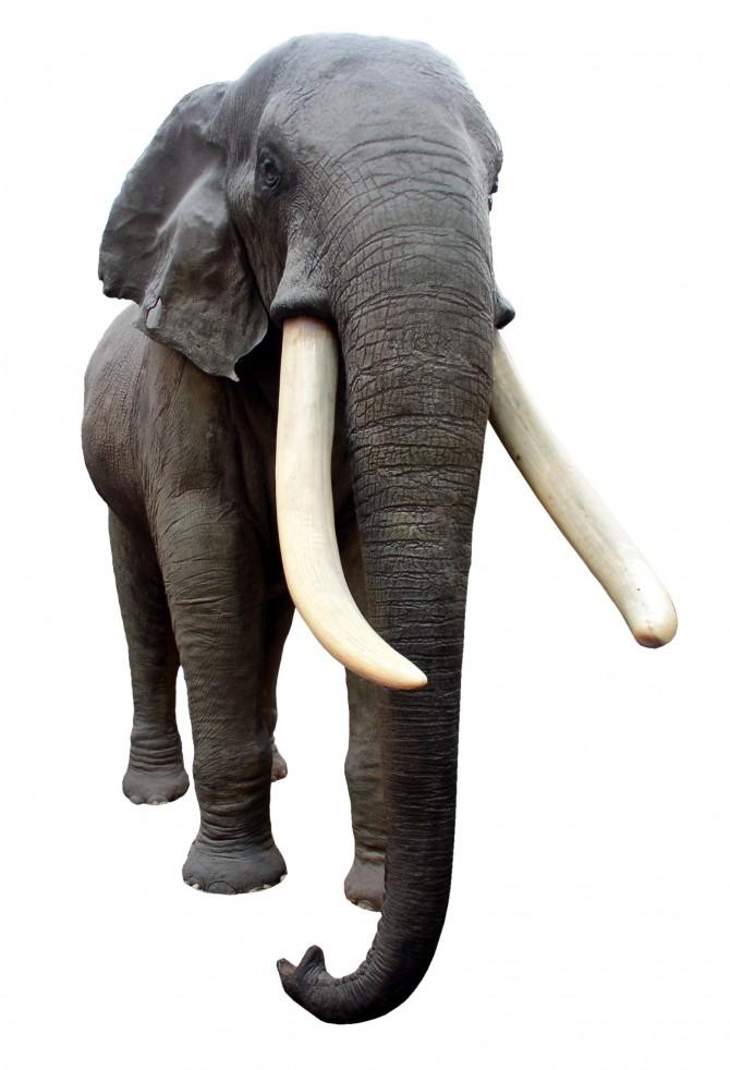 L'embaràs més llarg del món animal