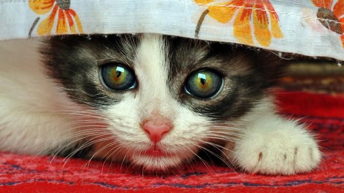 La curiositat va matar al gat
