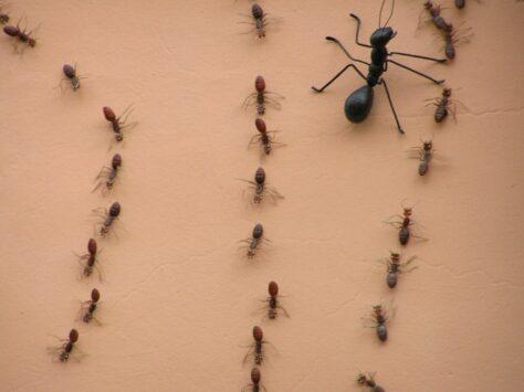 Les formigues són els èssers més semblants als humans