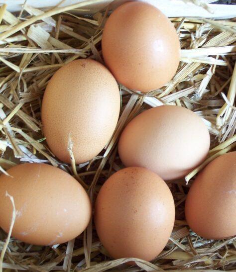Curiositats dels ous