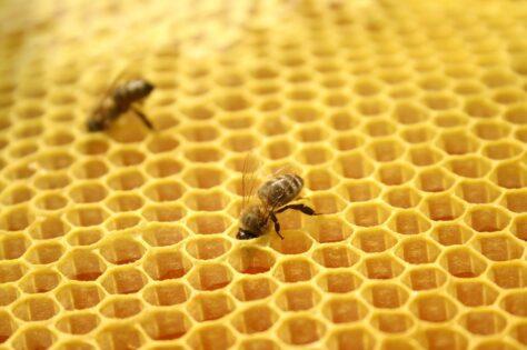 Les abelles saben matemàtiques