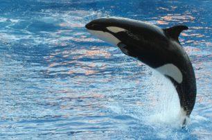 Curiositats sobre les balenes