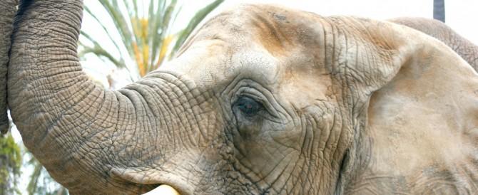 Els elefants i els seus queixals