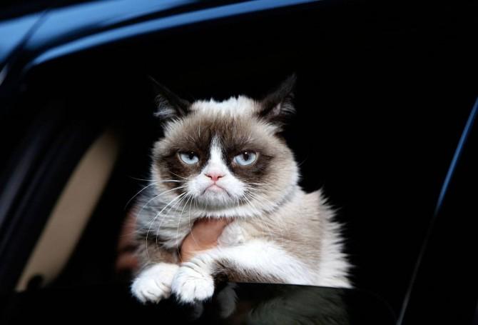 Els gats no fan cas, per què?