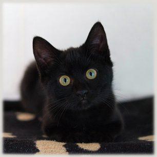 Els gats negres donen mala sort?