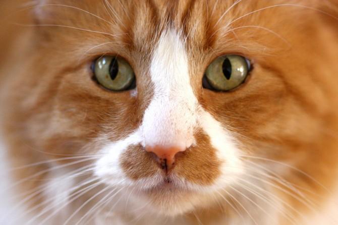 Per a què li serveixen els bigotis a un gat?
