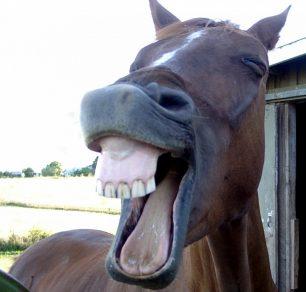 Curiositats del cavall