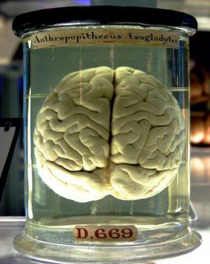 Curiositats del cervell humà
