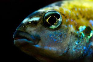 L'any 2050 al mar hi haurà més plàstics que peixos