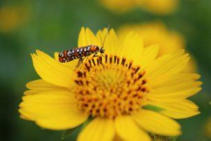 Els insectes no respiren per la boca