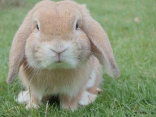 Curiositats dels conills