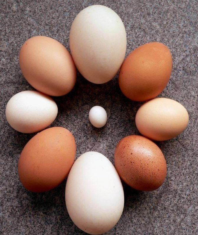 Per què els ous tenen forma d'ou?