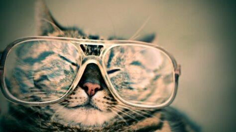 Dia internacional del gat