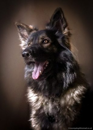 Un any de vida d'un gos equival a set d'un humà?