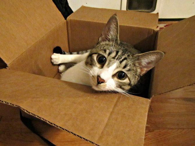 Per què als gats els hi agraden tant les caixes?